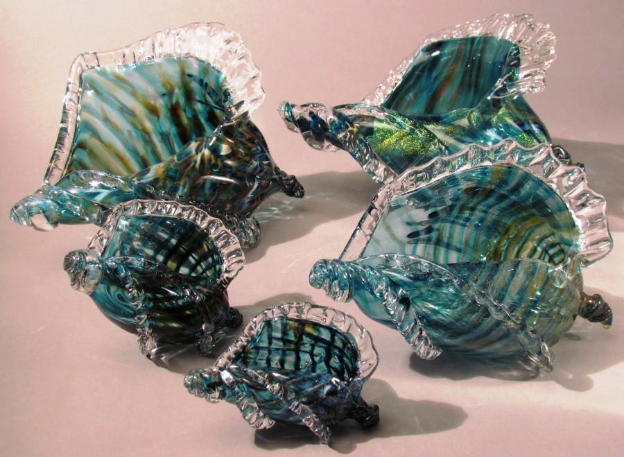 seashell-size--900x659